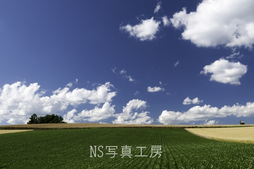 _DSC7900.jpg