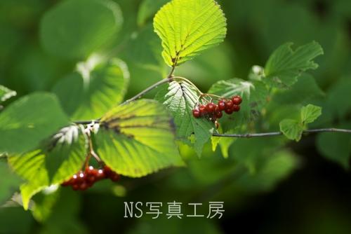 _DSY0361.jpg