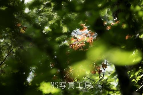_DSY0367.jpg