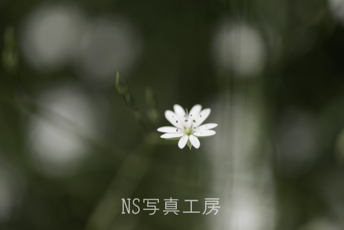 _DSZ9183.jpg
