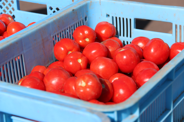 トマト入荷ブログ用