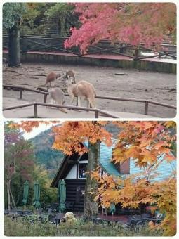 富士サファリパークの紅葉