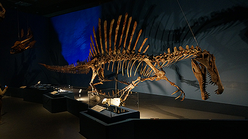巨大肉食恐竜 スピノサウルス
