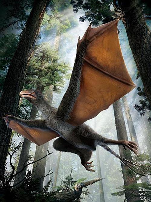 皮膜の翼を持った恐竜 イーの発見