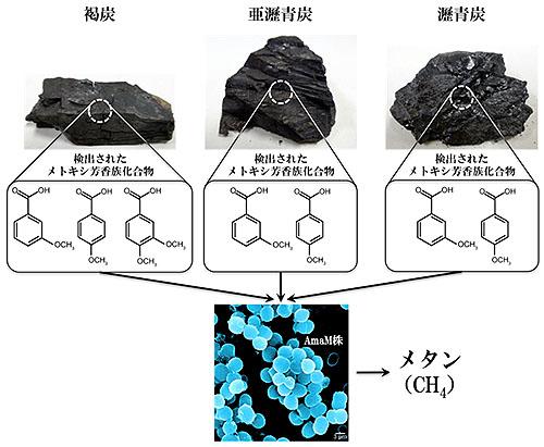 石炭→(菌)→メタンガス