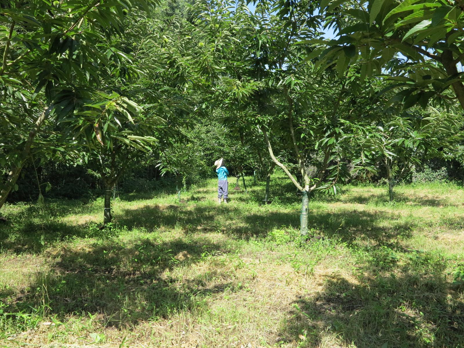 2016夏下の畑2