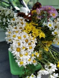 161008花