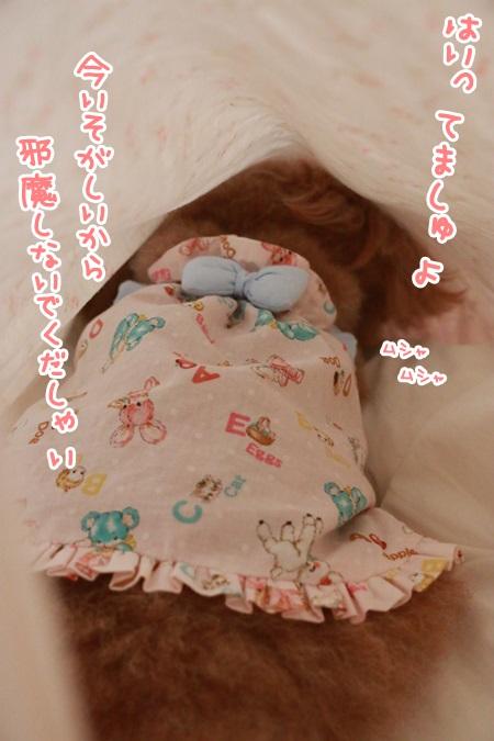 IMG_8011.jpg