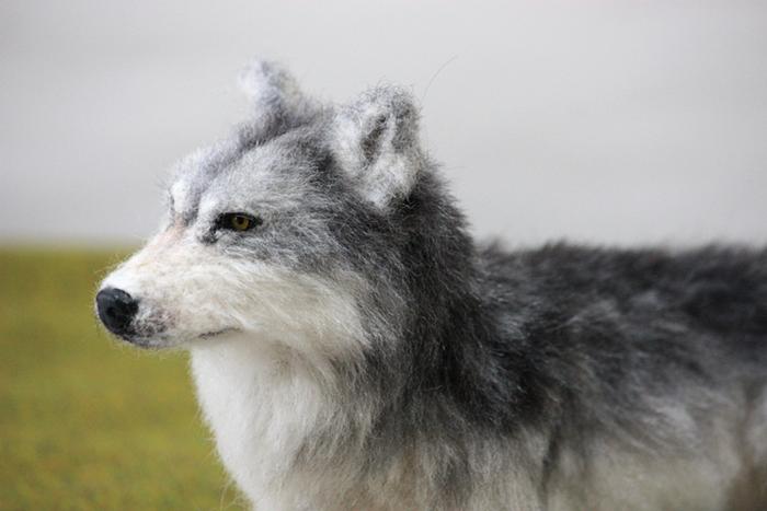 オオカミ - 6作目