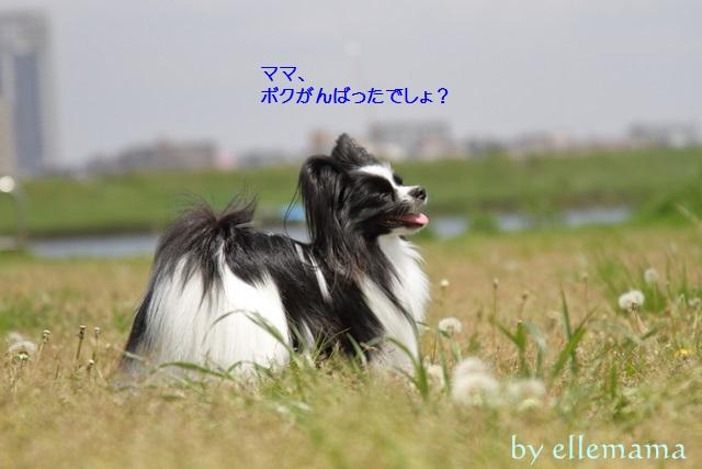 譏・蟄」譛ャ驛ィ螻輔€€201600001742_original - コピー