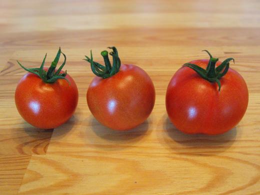 2016初トマト