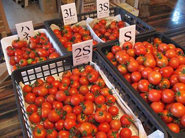 トマト作業5