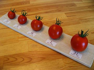 トマト作業4