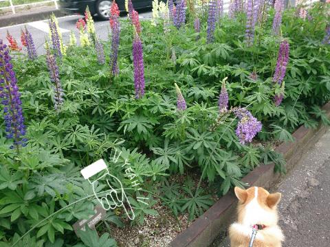 市道わき花壇