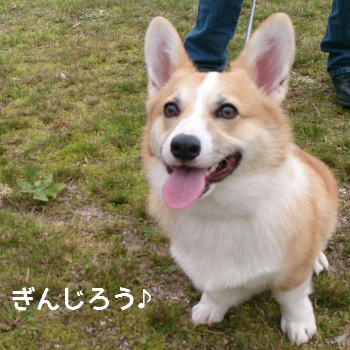 ぎんちゃん