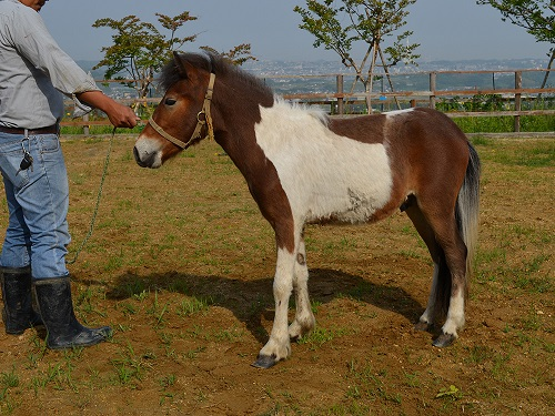 horse_104_2.jpg