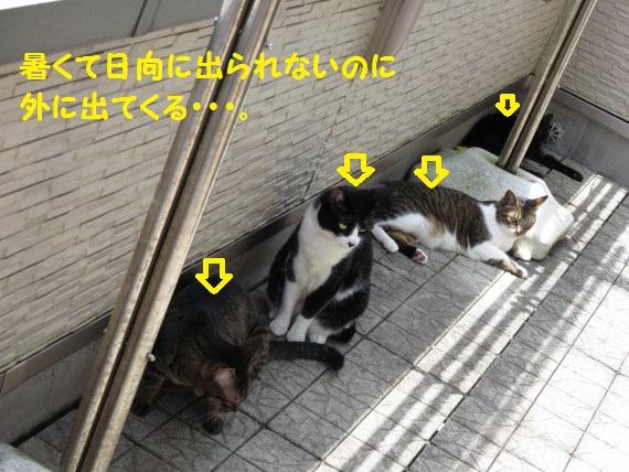 20160501-01.jpg