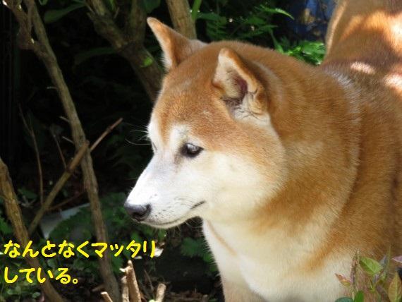 20160504-06.jpg