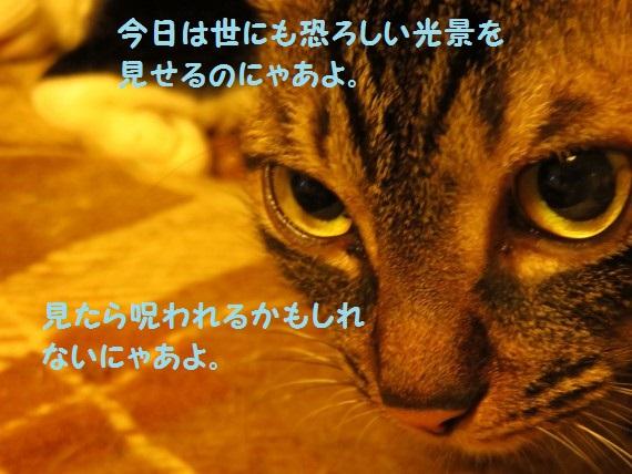 20160618-0001.jpg