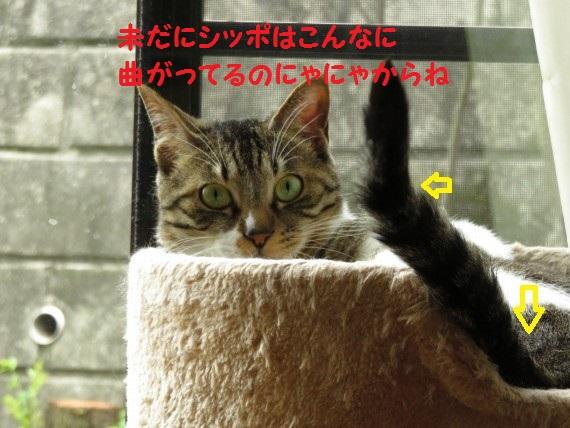 20160629-03.jpg