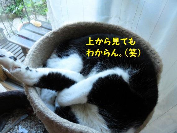 201606ne-09.jpg