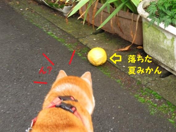 20160705-009.jpg