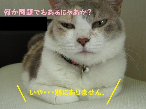 20160708-09.jpg
