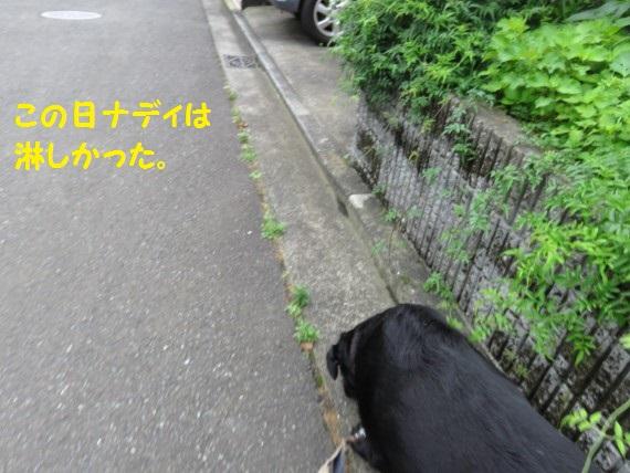 20160718-01.jpg