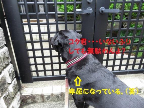 20160718-04.jpg