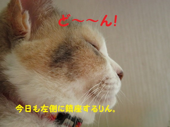 20160722-01.jpg