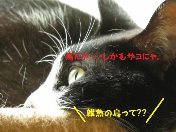 20160922-07.jpg