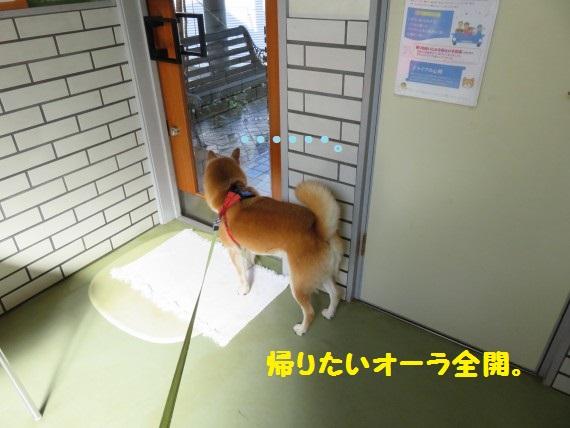 20161024-02.jpg