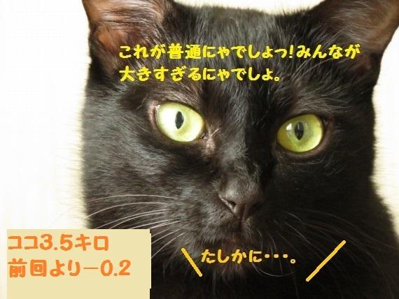 20161107-002.jpg