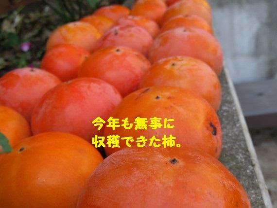 20161108-01.jpg