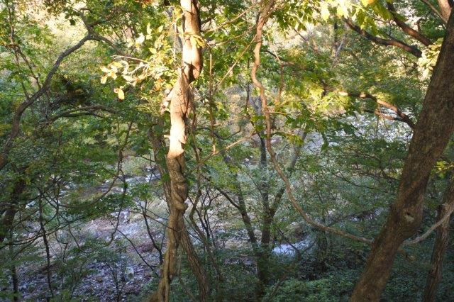 DSC_0092竹泉荘