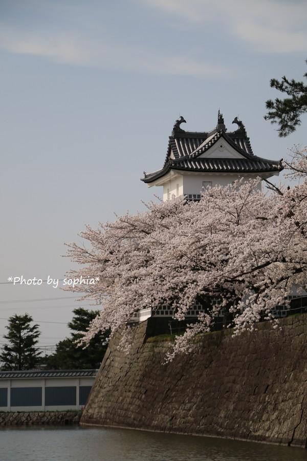 櫓と桜のある風景