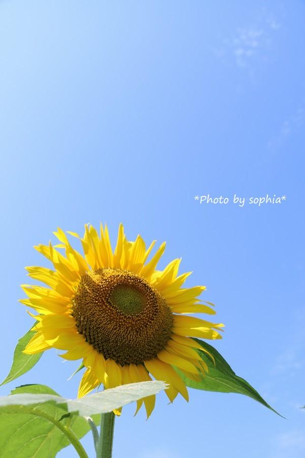 夏の元気色