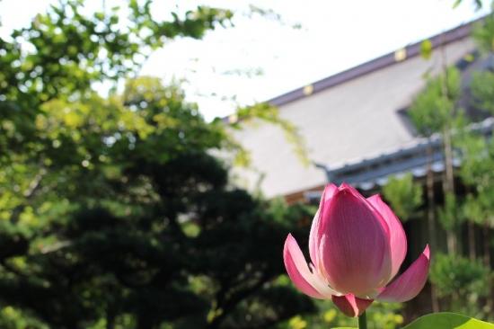 HamamatsuRyotanji_004_org.jpg