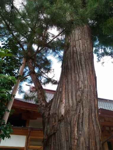 MatsueYaegaki_006_org.jpg