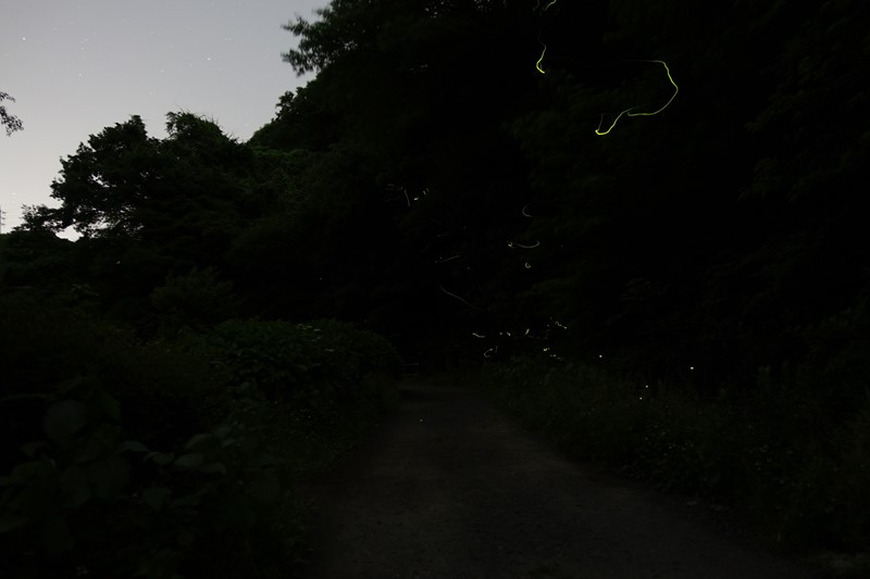 DSC04579-m3.jpg