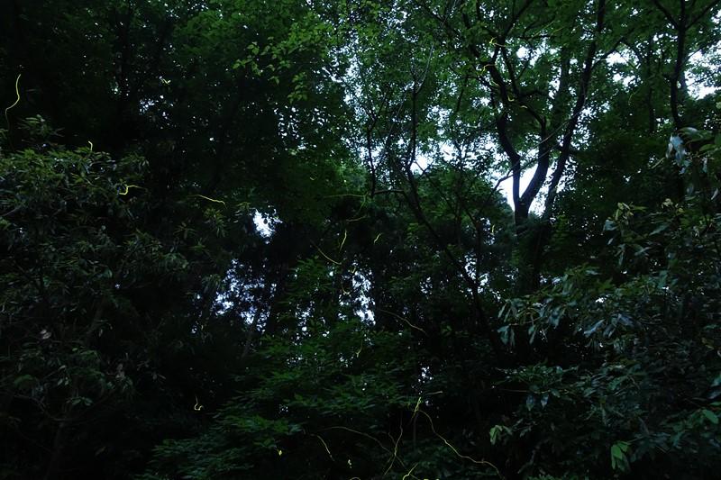 DSC04741-m3.jpg
