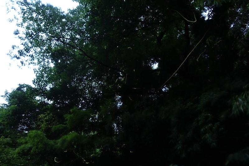 DSC04742-m3.jpg
