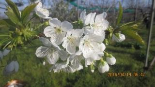 月山の花2