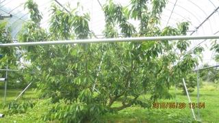 しんぼるツリー2