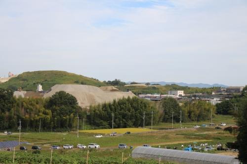 穂谷コスモス畑