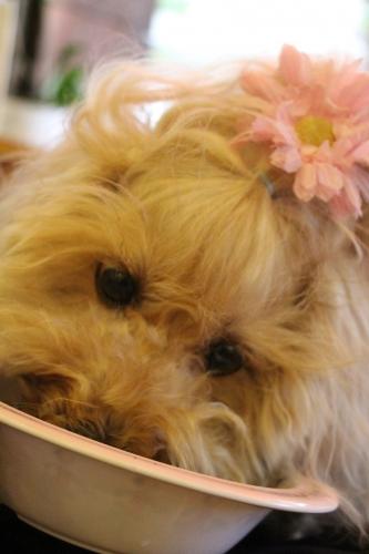 Dog Cafe PU
