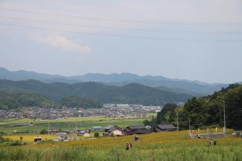 与謝野町ひまわりフェスティバル