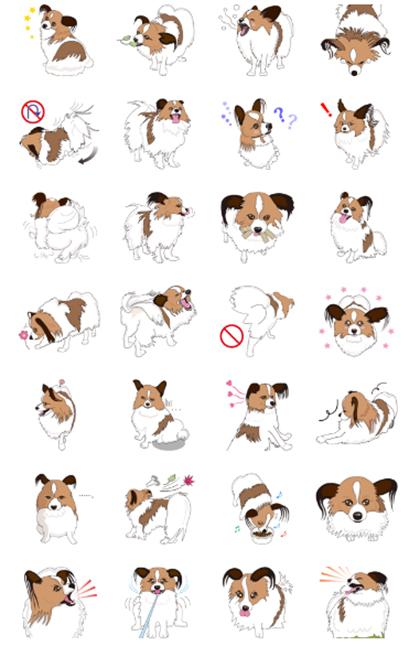 愛犬パピヨンの日常