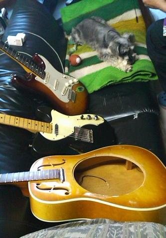 ギターとわんこ