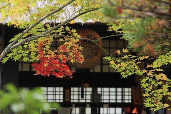 旧家に秋が来た
